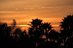 Sunset_behind_palm_trees