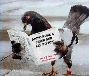 Pigeon_livre_Edilivre